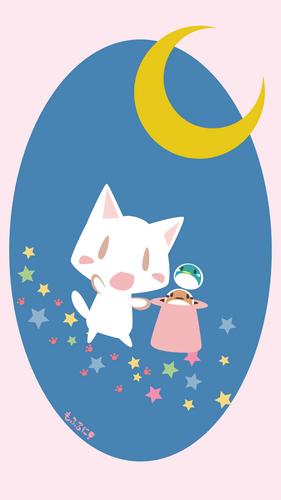 月夜の玉猫?